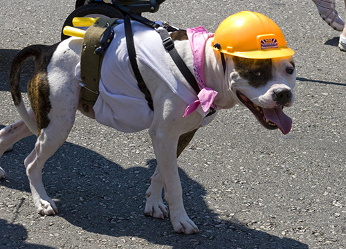 Dog in construction costume